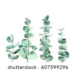 eucalyptus branches. watercolor ... | Shutterstock . vector #607599296