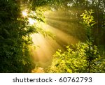 Sunbeams Pour Through Trees In...