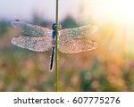 Dragonfly With Wings Covered I...
