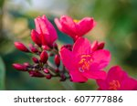 Flowering Bushes With Pink...