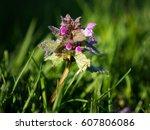 photo shows a closeup of a... | Shutterstock . vector #607806086