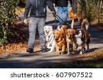 Stock photo walking dogs 607907522