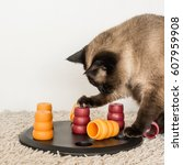 Stock photo clever siamese cat solving pet puzzle to get to the treats square 607959908