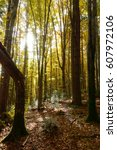 sunrise in the forest in the... | Shutterstock . vector #607972106