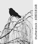silhouette of a black bird on... | Shutterstock . vector #608018168