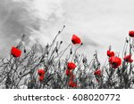 Guts Beautiful Poppies On Blac...