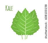 kale vegetable in cartoon flat... | Shutterstock .eps vector #608103158
