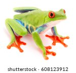 red eyed tree frog  agalychnis...   Shutterstock . vector #608123912
