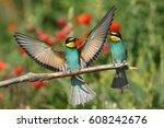 bee eater  mating season | Shutterstock . vector #608242676