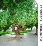 Small photo of White acacia, Robinia pseudoacacia, the Opera House. Odessa, Ukraine.