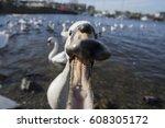 Happy Face Swan
