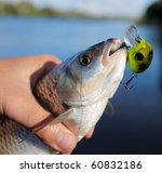 Chub caught on spinning bait against river landscape - stock photo