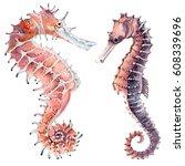 Hand Drawn Watercolor Seahorse...