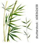 bamboo leaves and frames.... | Shutterstock . vector #608362658