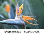 strelitzia reginae | Shutterstock . vector #608430926