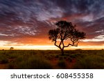 a hakea tree stands alone in... | Shutterstock . vector #608455358