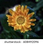 orange flower | Shutterstock . vector #608492096