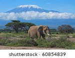 Large Adult Elephant With A...