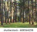 forest   Shutterstock . vector #608564258