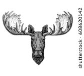 Hipster Moose  Elk Image For...