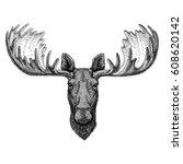 Hipster Moose  Elk Image For...