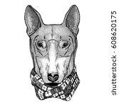 hipster dog bull terrier image...   Shutterstock .eps vector #608620175