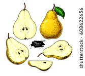 pear vector drawing. isolated... | Shutterstock .eps vector #608622656