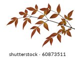 Russet Toned  Leaves  Isolated...