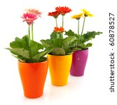 colorful  gerber plants in...   Shutterstock . vector #60878527