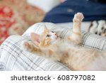 Stock photo kitten playing 608797082