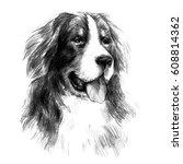Bernese Mountain Dog. Graphic...