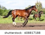 brown horse running home in the ... | Shutterstock . vector #608817188