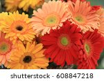 All Color Flower On The Summer