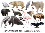 assortment of many north... | Shutterstock . vector #608891708