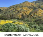 Super Bloom Of California Hill...