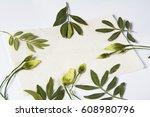 pressed flowers on white... | Shutterstock . vector #608980796