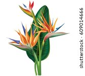 Strelitzia Reginae  Bird Of...