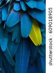 detail of parrot feathers | Shutterstock . vector #609018905