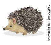 hendgehog