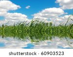 Green Grass Over The Water and cloud - stock photo