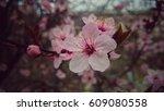 pink blossom | Shutterstock . vector #609080558