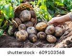 farmer harvesting fresh...   Shutterstock . vector #609103568