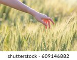 woman hand touching barley at... | Shutterstock . vector #609146882