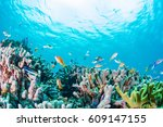coral reef and toropical fishes | Shutterstock . vector #609147155