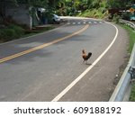 Road With A Chicken