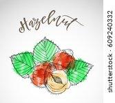 skech style watercolor hazelnut ... | Shutterstock .eps vector #609240332