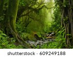 Nepal Jungle With River