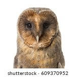 Stock photo close up of a barn owl isolated on white 609370952