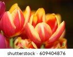 multi colored tulips | Shutterstock . vector #609404876