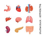 human organs anatomy  heart ... | Shutterstock .eps vector #609406796